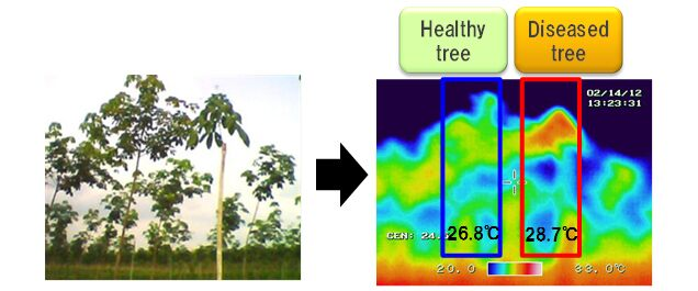 Temperature measurement with infrared camera