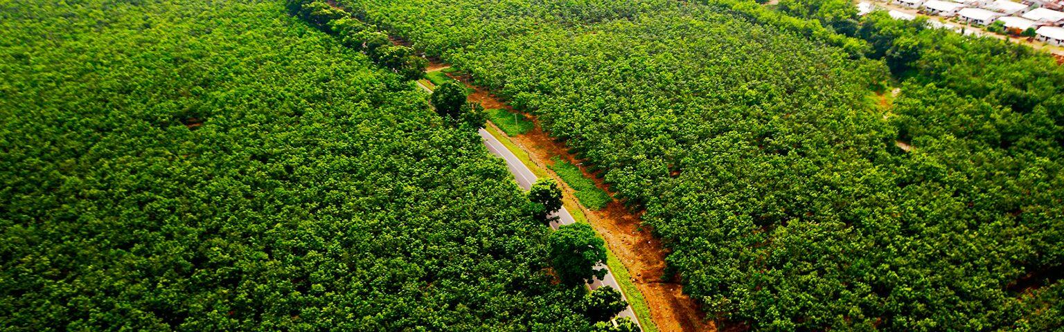 天然ゴム資源への取り組み-「資源の継続的活用と生産性向上」と「資源の多様化」